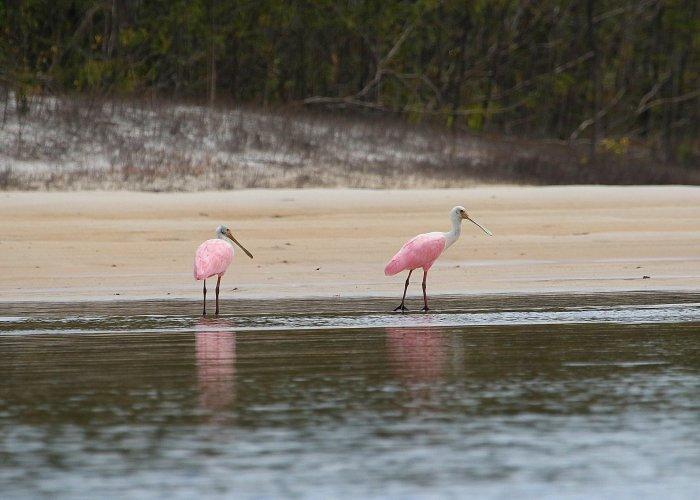 Amazon Birds