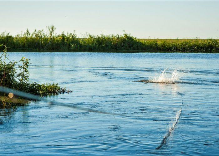 Top Water Action